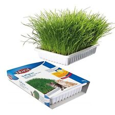 More details for cat kitten grass tray   feeding water food dish tray wipe clean floor placemats