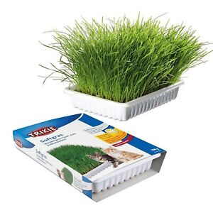 Cat Kitten Grass Tray | Feeding Water Food Dish Tray Wipe Clean Floor Placemats