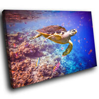 Ocean Coral Reef  Turtle Funky Animal Canvas Wall Art Large Picture Prints