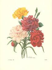 REDOUTE Botanical MIXED CARNATION BOUQUET Flower Art #89 NOT A COLOR COPY!!
