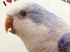 Blue Quaker Parrot Exotic Bird Vinyl Decal Bumper Sticker