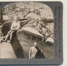 Lumberjacks Felled Monster Sequoia Converse Basin CA Keystone Stereoview c1900