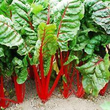 SWISS CHARD RHUBARB RED Beta Vulgaris  - 350 SEEDS 5g/0,17oz vegetable beetroot
