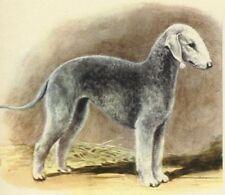 Bedlington Terrier - Dog Art Print - Megargee Matted