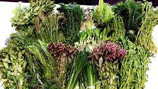 50 LIVE Tropical  AQUARIUM Plants, for tropical FISH TANK