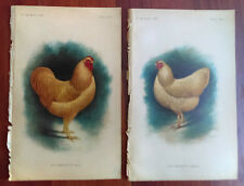 1901 2 Color Book Plate Drawings of Buff Wyandotte Chickens Male and Female