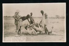 North Africa Catain A Buchanan Sahara Expedition 1922/23 RP PPC Damas Gazell