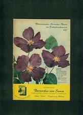Blumen Frühjahrskatalog 1957 Bernardus von Saase Aalen Pflanzen Stauden Fotos