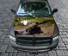 H109 MOOSE Hood Wrap Wraps Decal Sticker Tint Vinyl Image Graphic