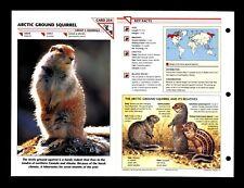 Arctic Ground Squirrel Wildlife Fact File Mammal Animal Card Home School Study