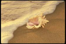 544022 Tropical Seashell By The Water Fiji Islands A4 Photo Print