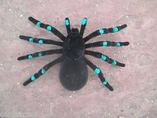 Large Spider Fake Halloween Prop Prank Black Green Fuzzy Tarantula Scuffed