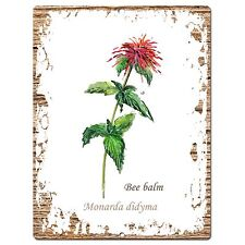 PP0705 Herb Bee balm Plate Sign Home Room Kitchen Store Restaurant Decor Gift