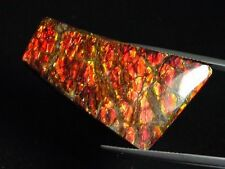 Ammolit / Ammolite 35,82 Ct. bunter Cabochon 40 mm (985w)