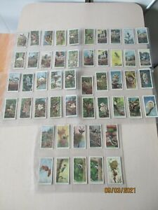 WD & HO Wills Life in the Tree Tops 1925 Full Set of 50 cards in plastic sleeves