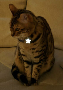 Kittyrama Cat Collar Charm Reflective Glow in the Dark Tag Accessory Visibilty