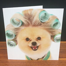 Gorgeous happy Greetings Card for fun people esp pomerainian/dog lovers