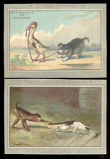 2 TRADE CARDS, DANIELL'S & SON VALENTINES at BROADWAY & 8th St. ~ 4 ANIMALS   Z7
