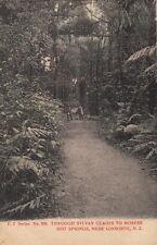 Postcard Through Sylvan Glades to Morere Hot Springs Gisbone New Zealand