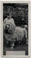 Poodle Dog With Young Child 1930s  Ad Trade Card