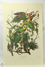 Audubon CAROLINA PARROT Birds Of America Amsterdam Edition Johnson C... Lot 1192