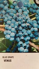 Venus Blue Grape 3 Gal Vine Plants Vines Plant Grapes Vineyards Garden