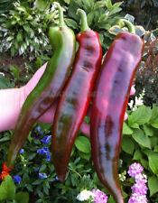 20 Sweet Pepper Seeds THAI LONG Heirloom Organic Vegetable