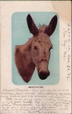 (xoy) Postcard: Donkey, Meditation