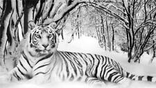 White Realism Animals Art Prints