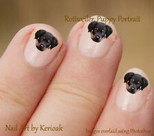 Rottweiler, puppy portrait, 24 Dog Nail Art Stickers Decals, Rottie nailart