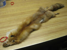 Tanned Red Fox Hide Reduced Damaged #0005795