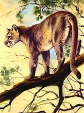 PITTURA PUMA COUGAR Mountain Lion GATTO Arte Poster Stampa lv2845
