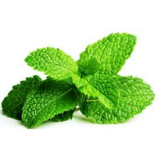 PEPPERMINT - Pure Essential Oil - 10 ml Aromatherapy / Therapeutic Grade
