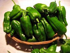 PADRON PEPPERS 25 Seeds OG – Heirloom Spanish Pepper Sweet / Mild / HOT