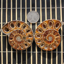 1Pair Madagascar Sea Natural Druzy Ammonite Slice Shell Gemstone Specimen