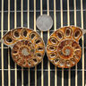 1 Pair Madagascar Sea Natural Druzy Ammonite Slice Shell Gemstone Specimen