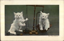 White Kittens Kitty Cats on Set of Scales c1910 Postcard