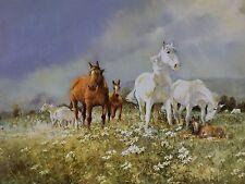Darcy Doyle / d'Arcy  W. Doyle / Daisy Patch / L .E. Horses.