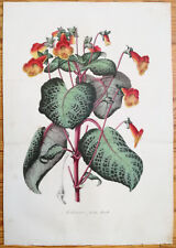 van Houtte Garden Flowers Large Print Achimenes picta from Mexico 1846 (NS)