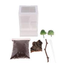 Reptile Habitat Box Acrylic Feeding Box Terrarium Small Pet Breeding Box