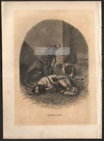 Lot of 5  Authentic c1900 Antique Animal Prints Sheep Dogs Seals Cattle Etc. 2