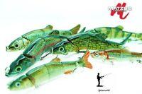 MATZUO Doragon Minnow lure  - Variety colurs & sizes RATTLIN   1st class post