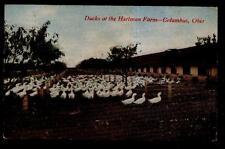 Postcard COLUMBUS Ohio/OH  Hartman Duck Farm Sheds view 1907