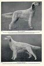 ENGLISH SETTER TWO NAMED DOGS OLD ORIGINAL DOG PRINT PAGE FROM 1934