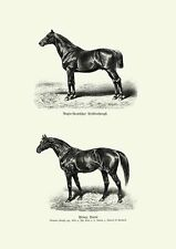 Pferd Bilder Anglo Araber Prince Paris Vollblut 1880 26 Faksimile
