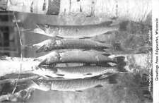 Edgewater Wisconsin Fish Catch Real Photo Antique Postcard K100119