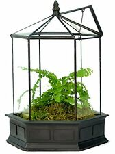 WAR151 H Potter Six Sided Glass Terrarium Plant Wardian Case Garden Gift Planter