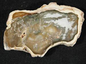 Petrified Wood Fossil Slab Polished 68.9gr