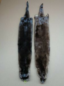 2 Tanned River Otter Hide/Pelt/Furs/Trapping/Taxidermy/Free shipping