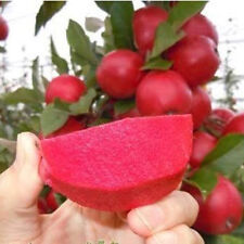 10 fresh seeds Red Delicious Tree Grow Secret Garden Tree nice